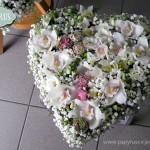 45_IMG_0456web